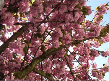 Kostenloses Stokfoto -Baum in Blüte